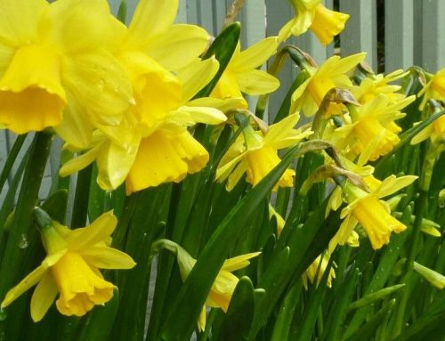 Five Reasons Spring Is The Best Time Of Year: Celebrating The Equinox